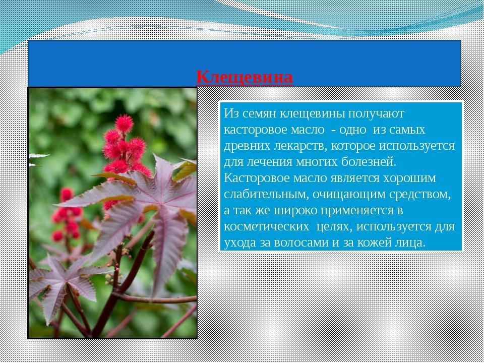 C:\Users\Marat\Desktop\img1.jpg