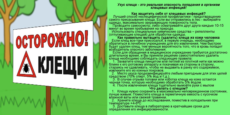 http://karasul-interkor.depon72.ru/wp-content/uploads/sites/23/2020/04/kleshhi1.jpg